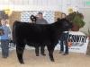 Grand Champion Beef - Austin Lynd