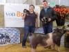 Reserve Grand Champion Hog