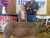 Reserve Grand Champion Hog - Madelyn Newton